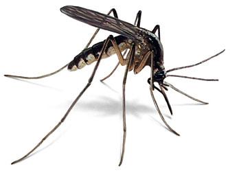 Bihar records over 1800 cases of Dengue in 2013