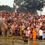 World Famous Sonepur Cattle Fair to begin on November 16